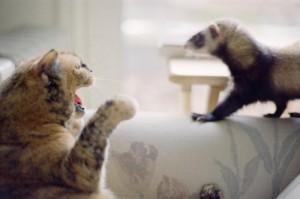 Dihorul versus alte animale de companie