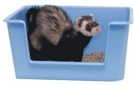Ferret-Litter-Box