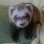 Poză de profil pentru ana-simona